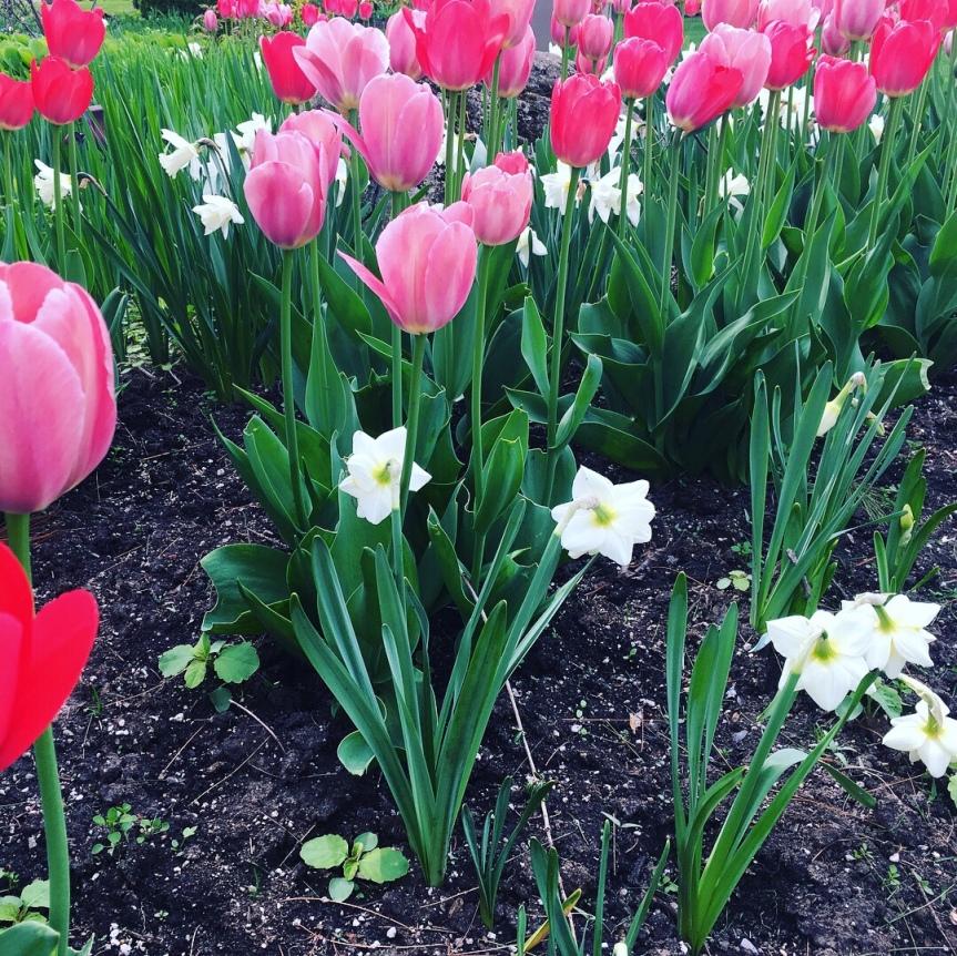 Travel Toronto Guild Park &Gardens
