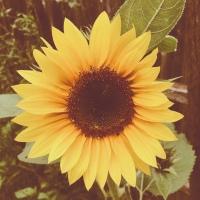 Hello September! 🍂 🍁 🍃